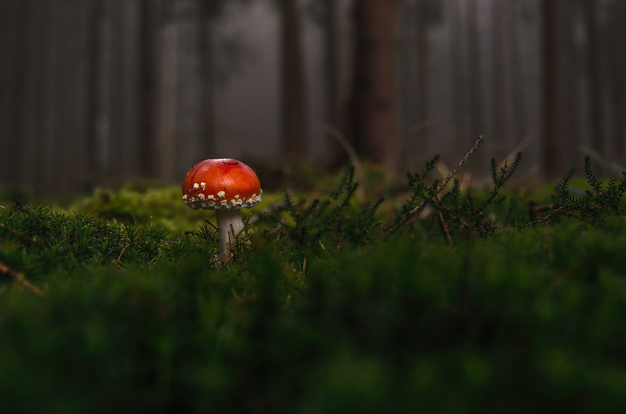 forest-1097403_1280
