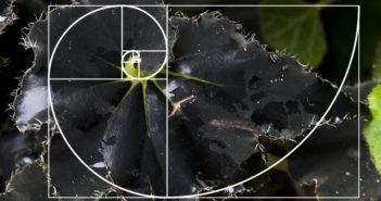 kompozycja zlota spirala