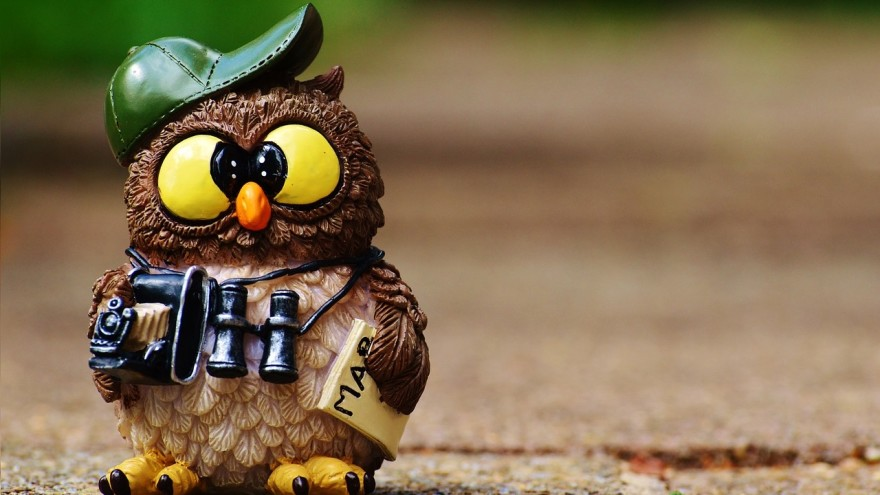 owl-964011_1280