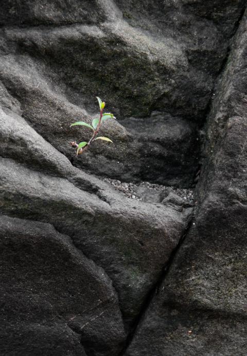 zdjęcia w ogrodzie kamienie