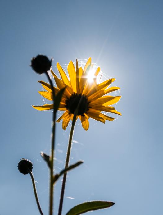 zdjęcia w ogrodzie słońce