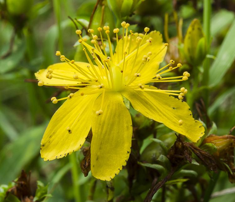 jak wykorzystać mini statyw makro kwiat