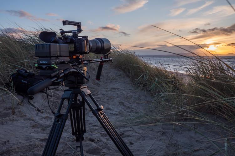 filmowanie przyrody