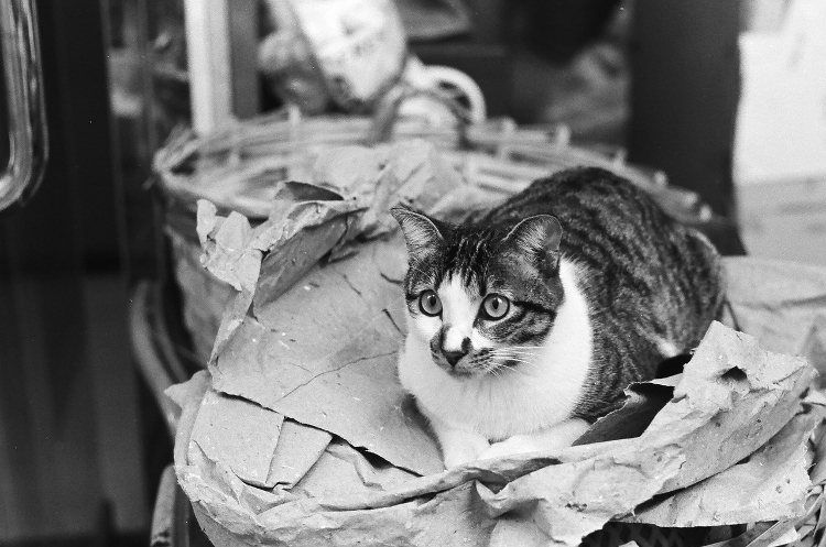 fotografia miejska portret zwierzat