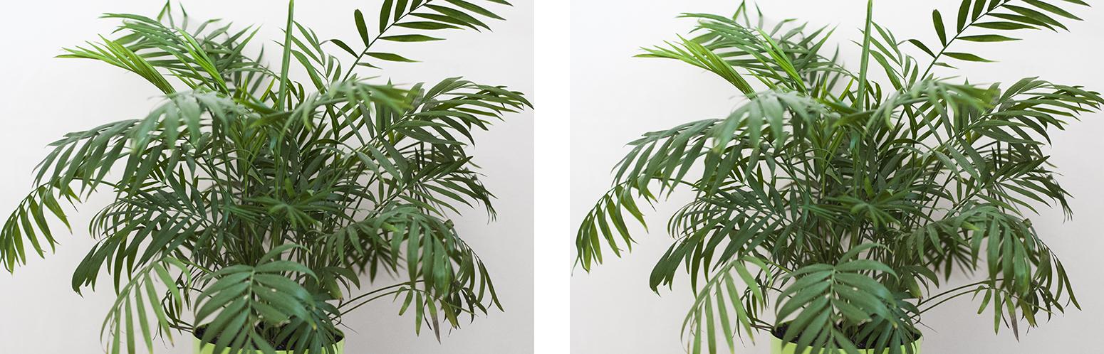 stereoskopia zdjęcia 3d stereopara 1