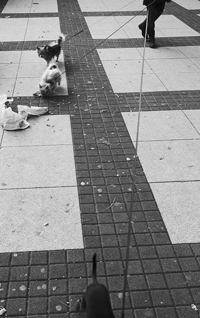 street photo psy