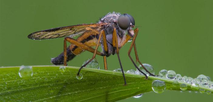 makrofotografia zdjecie glowne komar kopia 18 9
