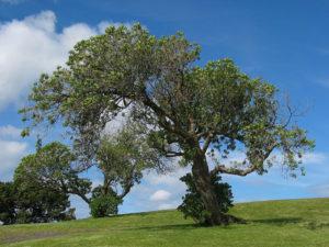 fotografia podczerwona drzewo swiatlo widzialne