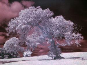 fotografia podczerwona swiatlo podczerwone drzewo