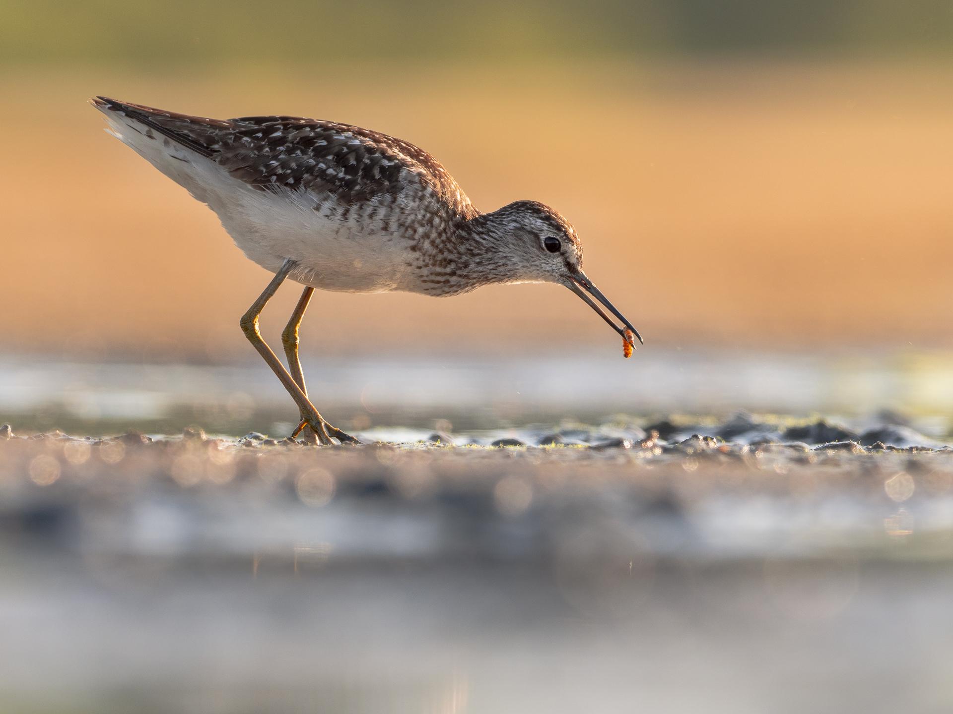 fotografia ptaków