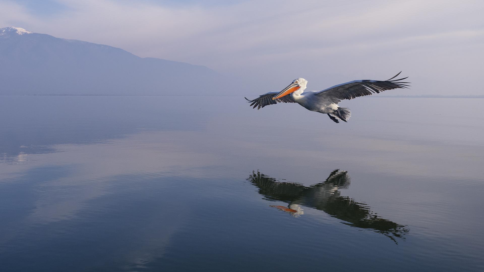 fotografia przyrodnicza Łukasz Bożycki