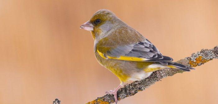 Łukasz Bożycki fotografia ptaków
