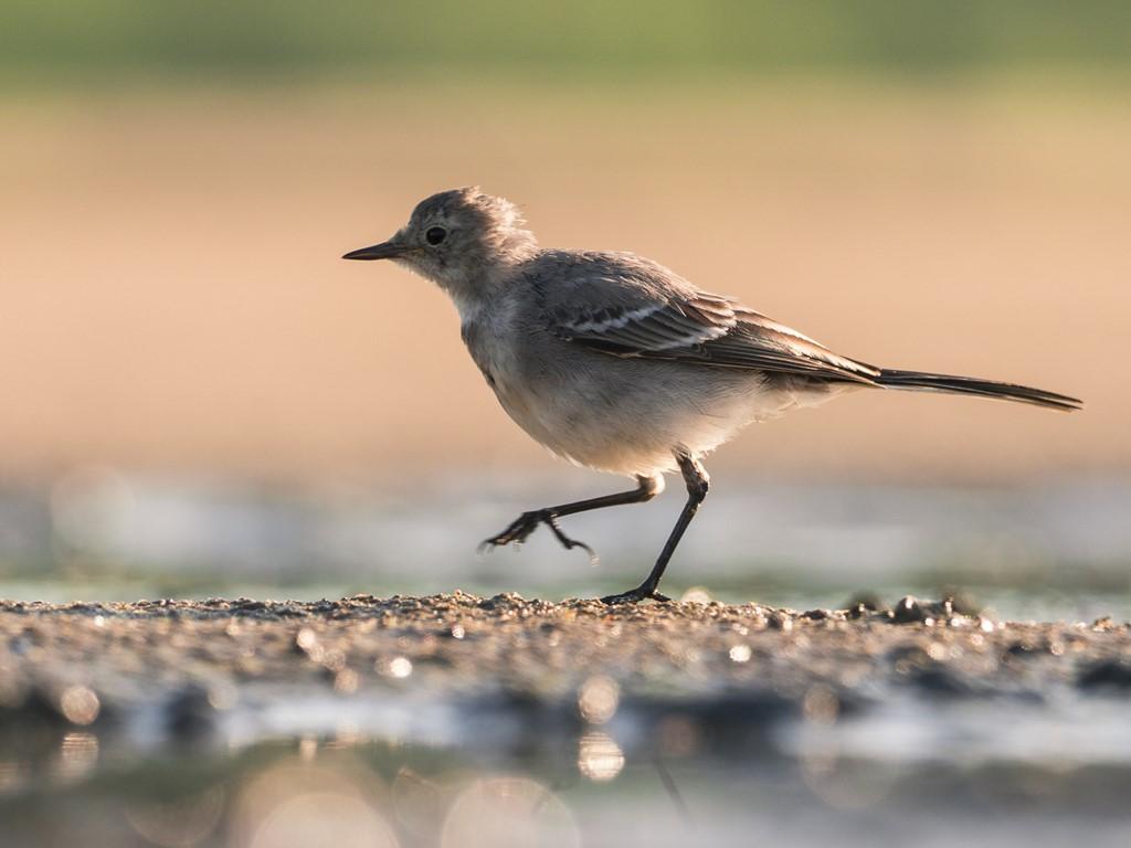aparat do fotografii ptaków