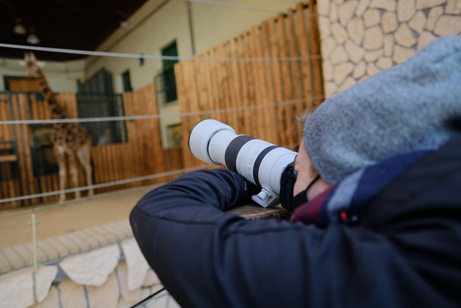 Obiektyw RF 100-500 mm na spacerze w zoo. Fot. Jarosław Respondek